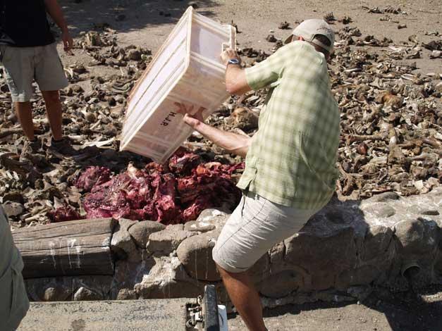 HESC Student Programme - Christian offloading vulture restaurant meat