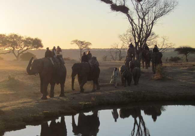 HESC - July/August Students on Elephant Back Safari at Camp Jabulani