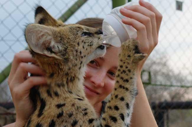 Caroline Bedford & Savanah the serval
