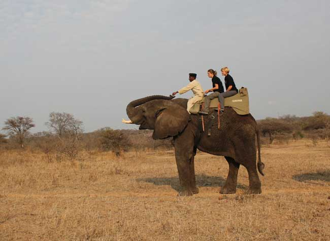 Elephant Back Safari at Camp Jabulani