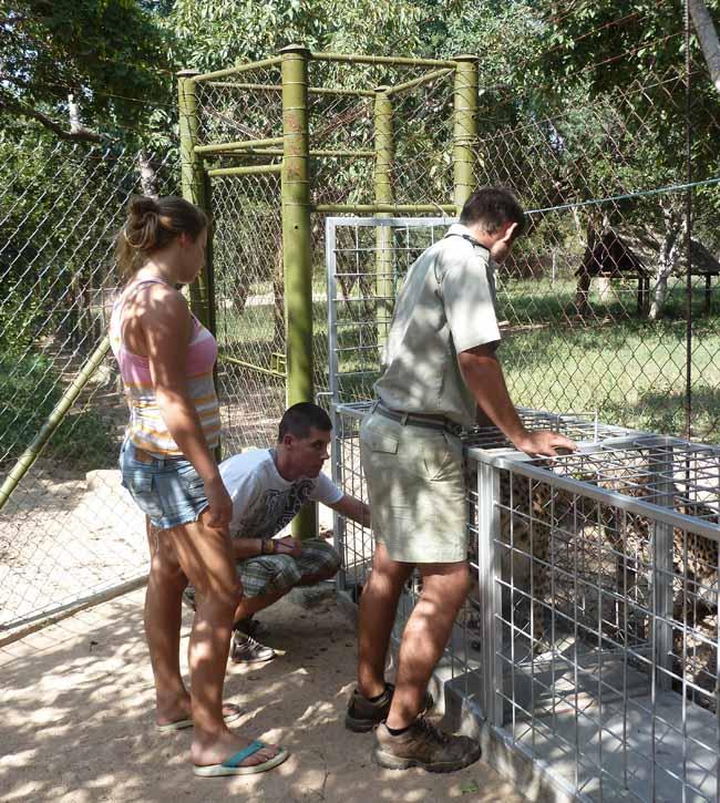 Sarah, Poala and Sam with the cheetahs