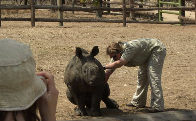 A Student lends a hand with a baby rhinoceros at the HESC