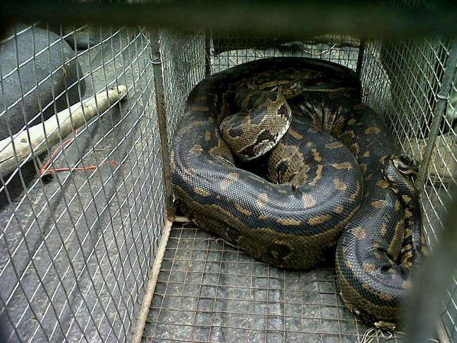 1 Python blog