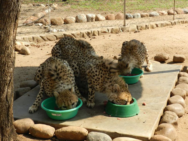Youngsters having lunch