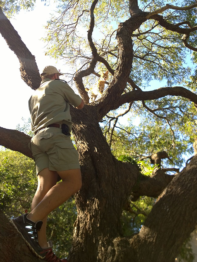 3. Kobus to the rescue