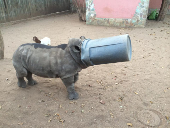Gertjie and the dustbin