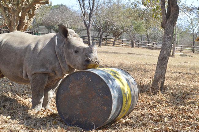 Gertjie's barrel