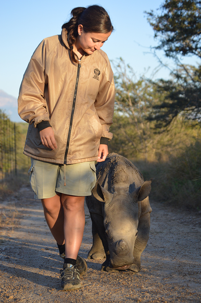 Anri takes Gertjie the orphaned rhino for a walk