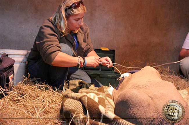 New-baby-rhino