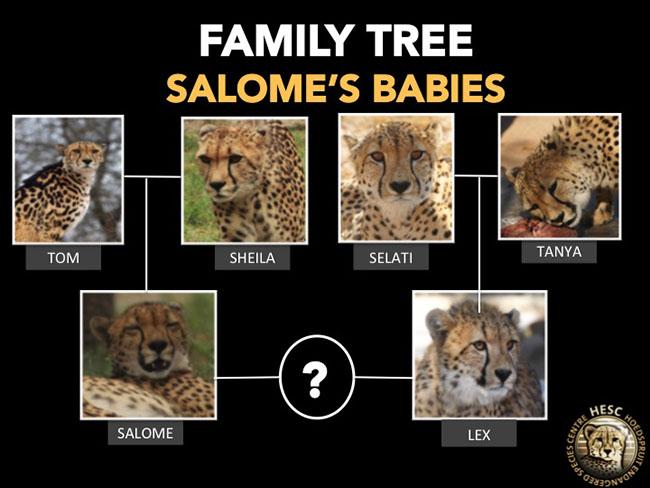 HESC_Salome_FamilyTree_18 Apr15 (1)