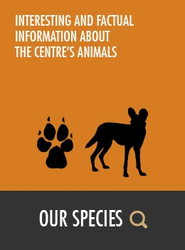 Our Species | Wild Dog