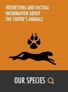 Species at HESC