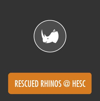 Gallery Rescued Rhinos @ HESC