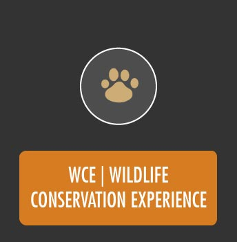 Gallery WCE Wildlife Conservation Experience