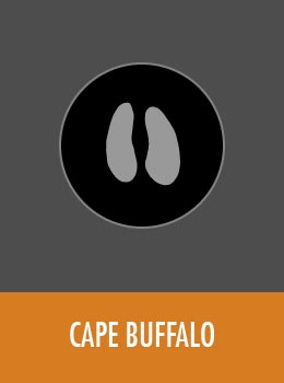 species-cape-buffalo-tile