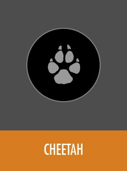 species-cheetah-tile
