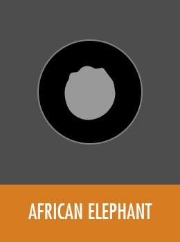 species-elephant-tile