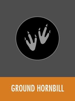 species-hornbill-tile