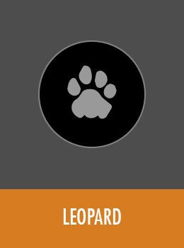 species-leopard-tile