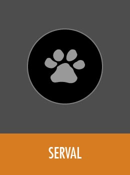 species-serval-tile