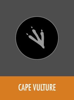 species-vulture-tile