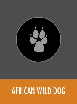 species-wild-dog-tile