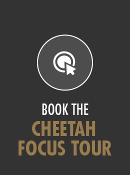 Book Cheetah Focus Tour