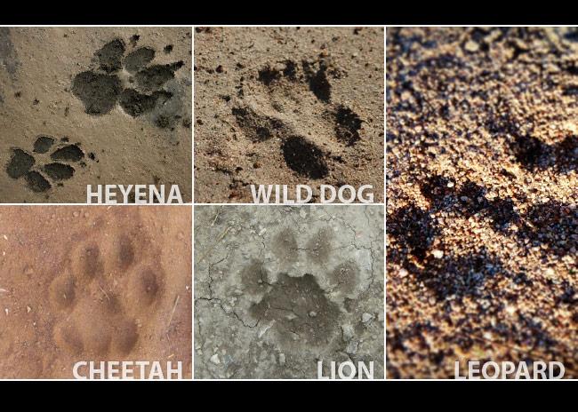 animal tracking hesc