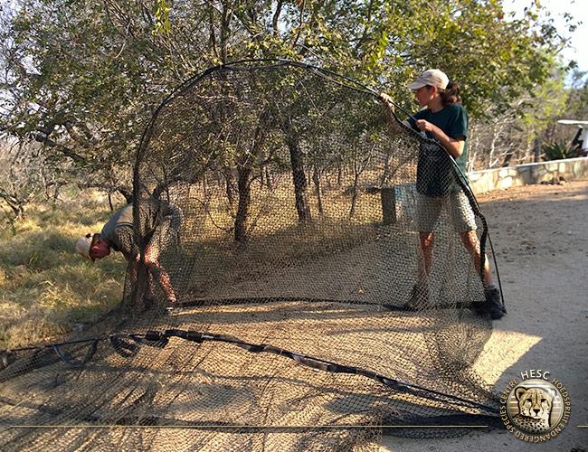 Ground-hornbill-trap