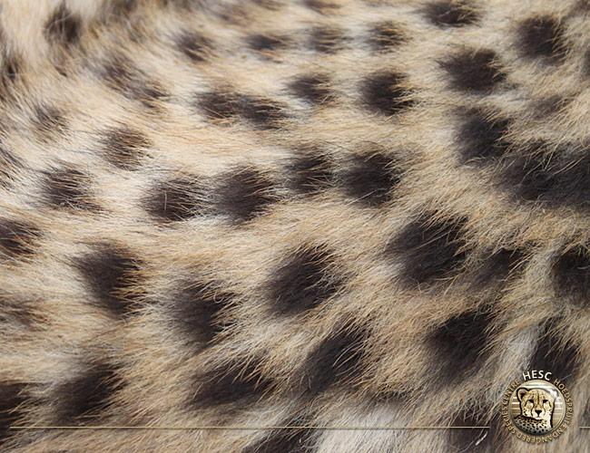 cheetah-cub_8-months