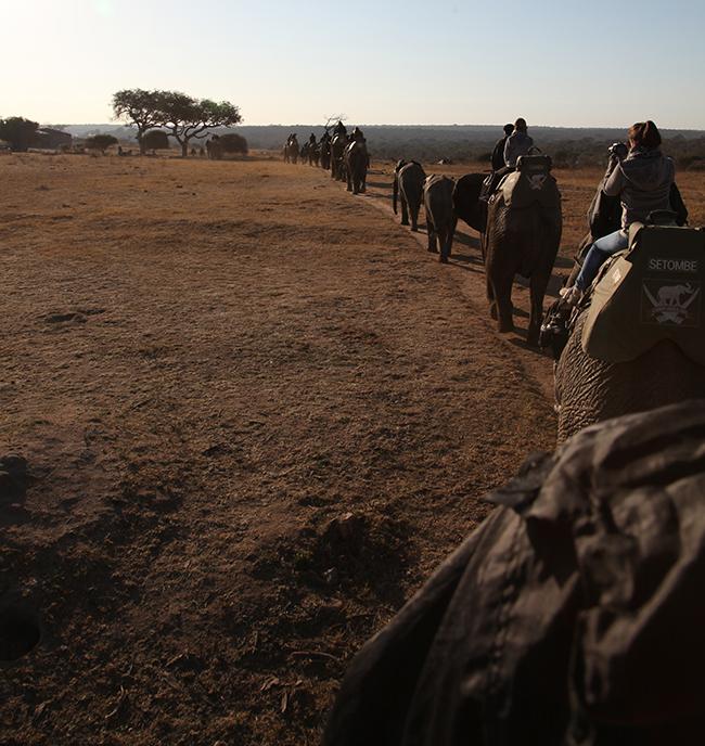 At the elephant back safari