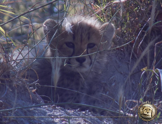 Curious-cub