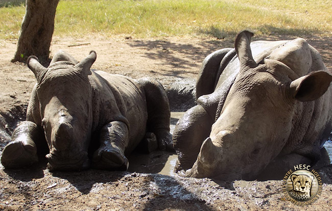 Gertjie-&-Matimba's-little-mud-bath