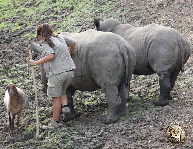 Lammie-on-the-lookout-while-Anri-rubs-mud-on-Gertjie