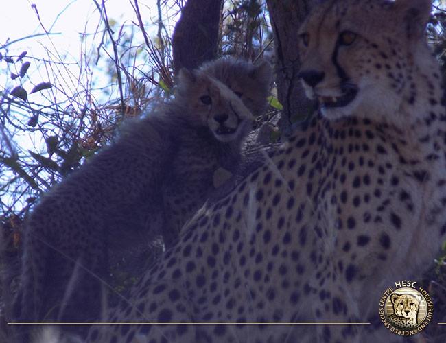 Salome-&-cubs-exploring