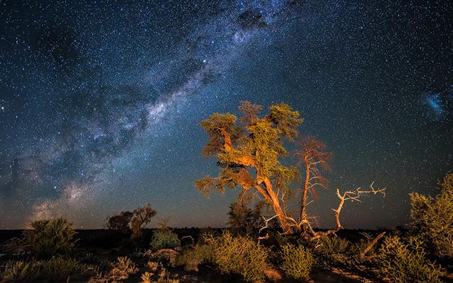 Kalahari Night