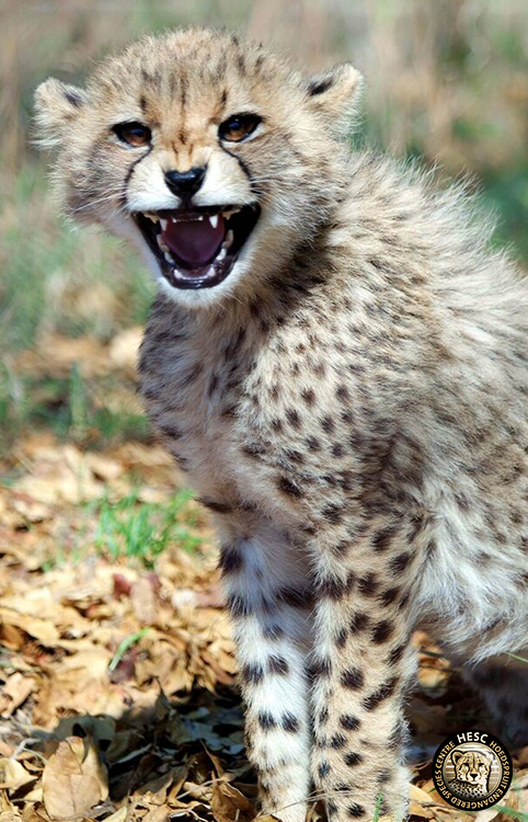 Salome's cub one