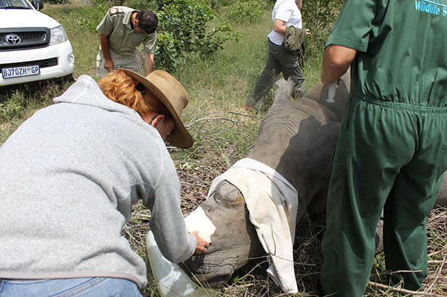 HESC_LionDen_Rhino_17Jan15-65
