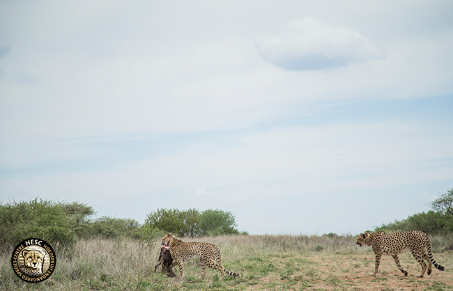 AB7V1713_Wim-taking-the-warthog-and-carrying-it-off