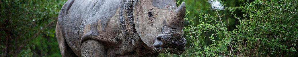 Projects and Programmes - Rescued Rhinos @ HESC