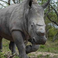 Rescued Rhinos @ HESC
