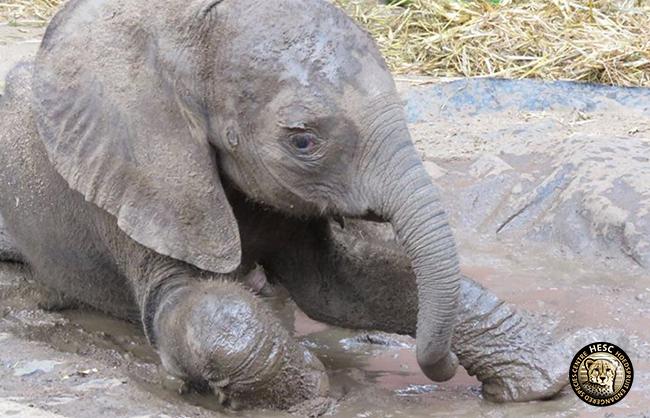 IMG_7133_Amanzi-and-Elephants-Alive