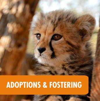 Help HESC Adopt