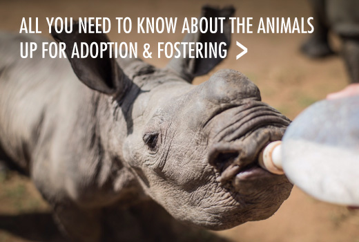 Adoptions & Fostering Info
