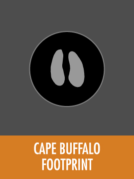 Cape Buffalo tile