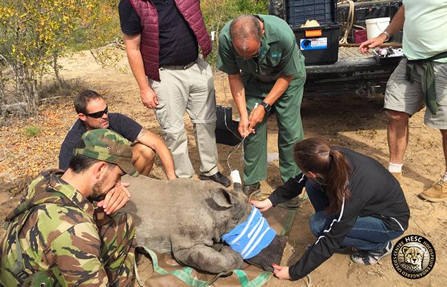 Rhino calf, Khulula