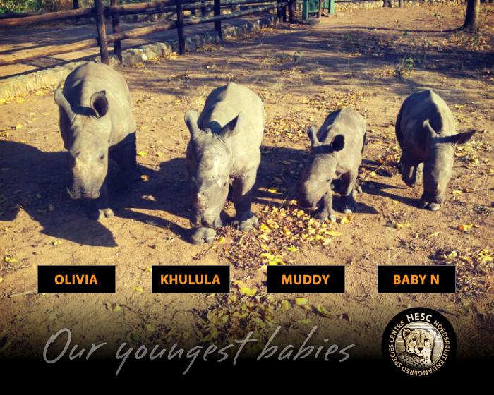 Orphaned rhinos at hesc