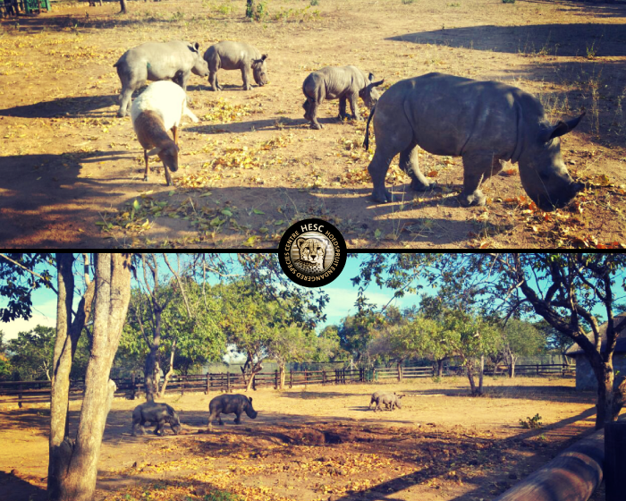 New-Rhino-Khulula-May2016-02