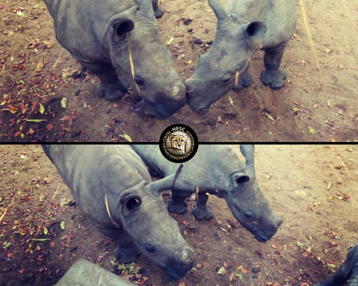 New-Rhino-Khulula-May2016-03