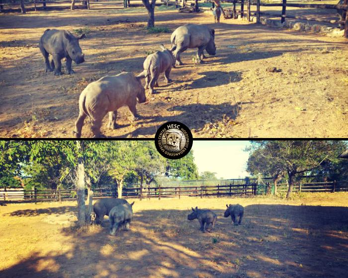 New-Rhino-Khulula-May2016-04